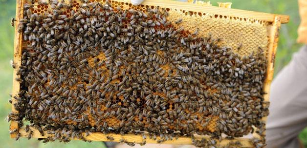 iklim değişikliğinde arıları koruma, Arıcılık uzmanından iklim değişikliğinde arıları koruma önerileri