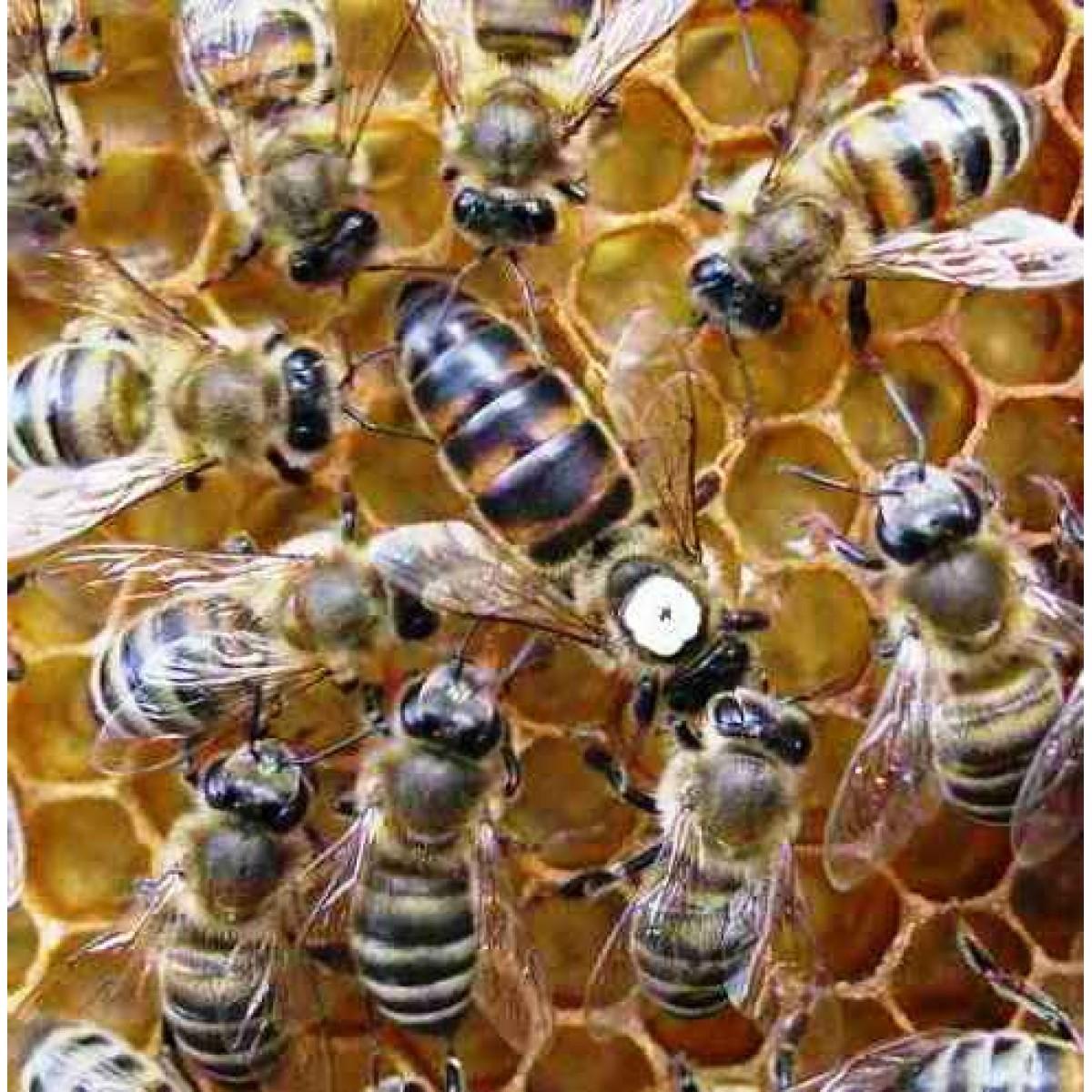 Ana Arı (Kafkas Irklı ), iklim değişikliğinde arıları koruma, Arıcılık uzmanından iklim değişikliğinde arıları koruma önerileri